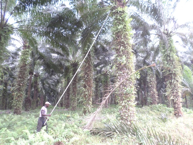 Palmharvest